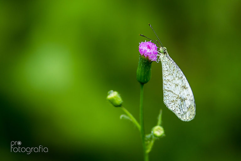 PInk Flower kissed by Butterfly